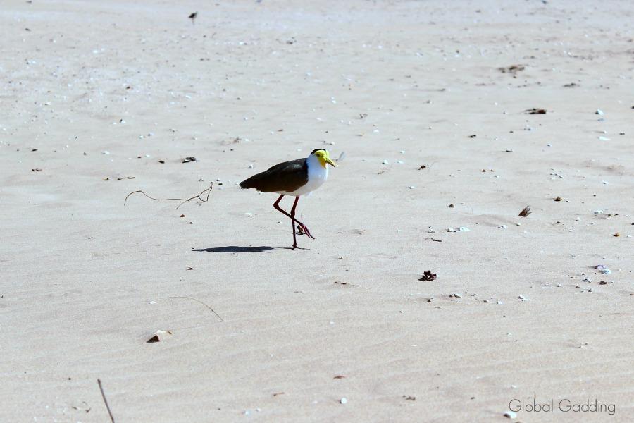 Darwins Mindil Beach NT