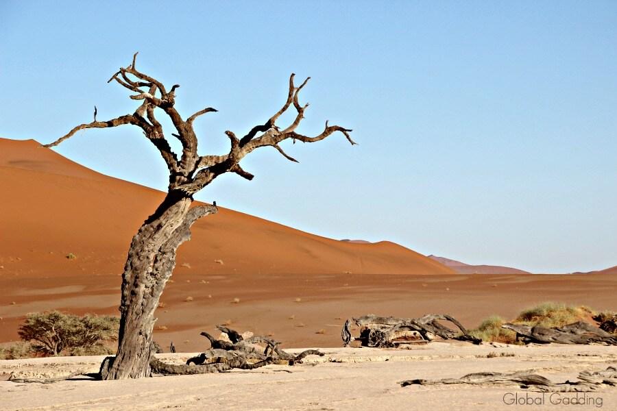sossusvlei sand dunes from deadvlei