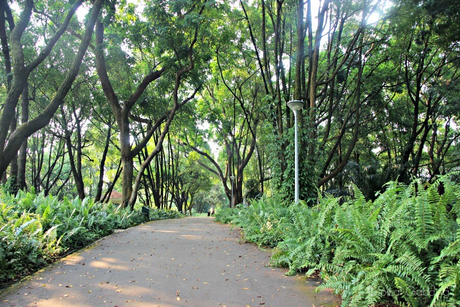 alternative things to do in singapore southern ridges