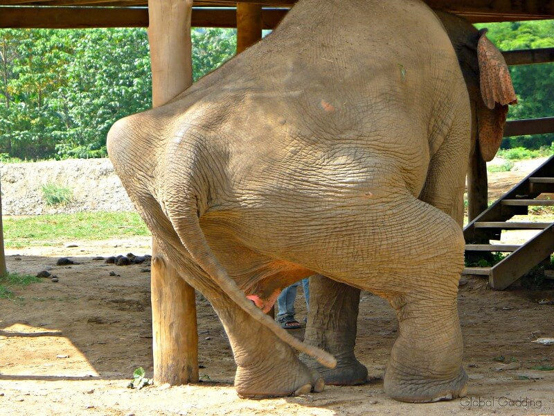Ethical Elephant Encounters At Elephant Nature Park Thailand