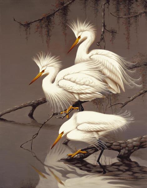 Robertson  Snowy Egrets  Art Print  Global Gallery