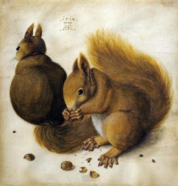 Albrecht Durer Two Squirrels One Eating A Hazelnut