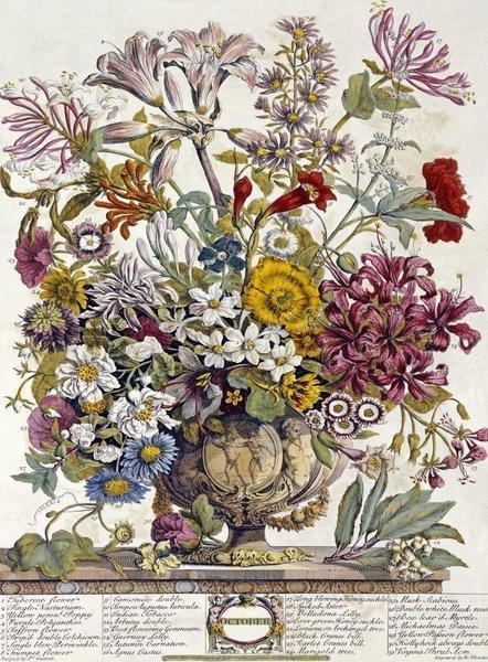 Robert Furber  October  Twelve Months of Flowers  Art