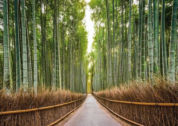 Pangea Images Bamboo Forest Kyoto Japan Art Print