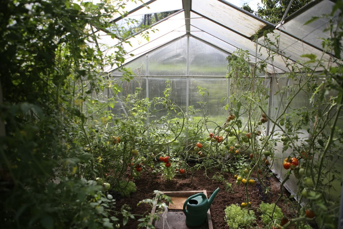 How To Build A Backyard Greenhouse For Year Round Gardening Global Garden Friends Inc