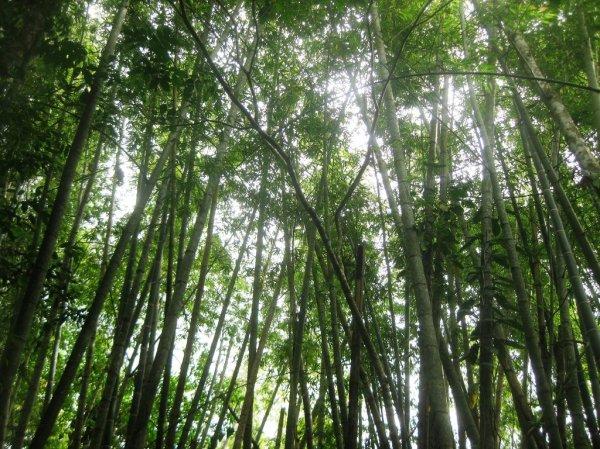 bamboo shelter battered women