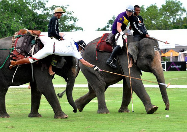 Elephant Polo in Rajasthan, India