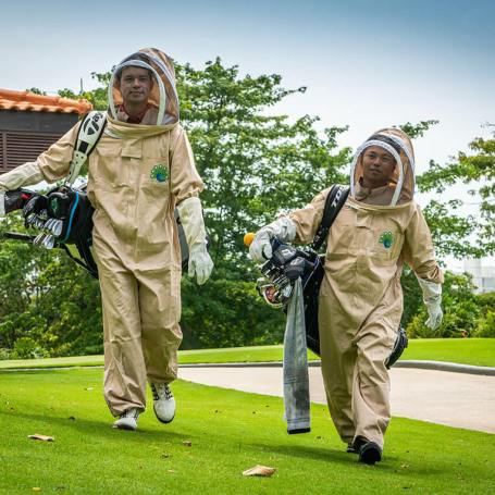 Singapore's Sentosa Has The Bee's Tees Of Ideas