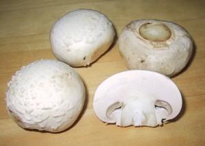 White Mushroom By Chris-73 @ Wikipedia