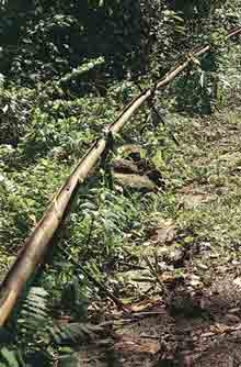 photo from www.rainwaterharvesting.org