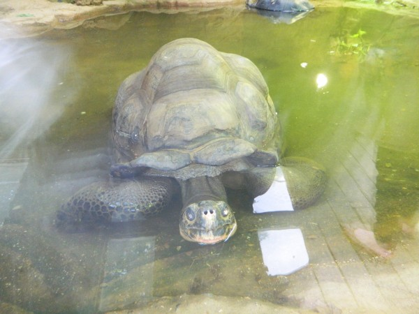 Zoo 2012 574