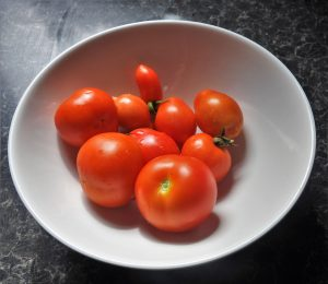 some-of-our-newly-picked-tomatoes