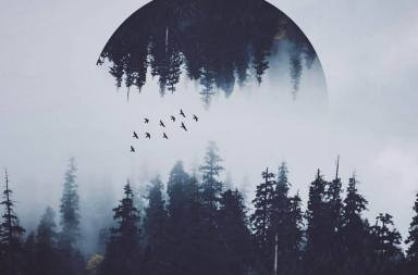 Digital art with a misty forest, birds.