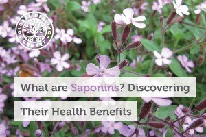 A flowery plant. Saponins are compounds commonly found in plants that possess health benefits including immune system support.