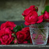 How Are Roses Used As Herbal Medicine?