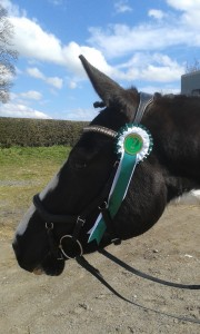 Bailey 2nd dressage outing rossie