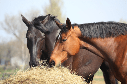 Naturally Calm Horse Tips 1