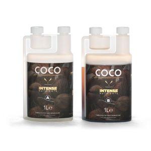 intense coco