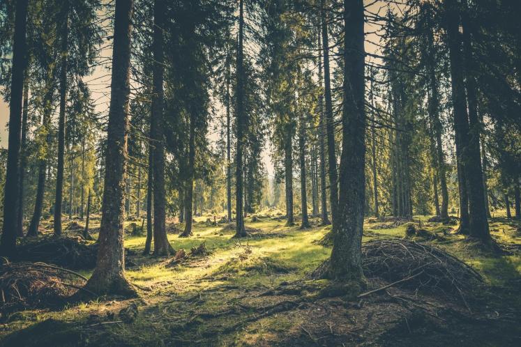 نتيجة بحث الصور عن البيئة