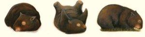 wombat-monday
