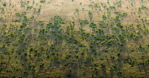 Africa's Great Green Wall: Building Prosperity and Resilience