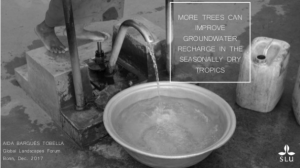More trees can improve groundwater