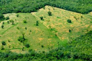 Bonn Challenge meeting aims to bring forest landscape restoration to earth