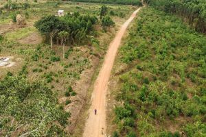 Greater rights for women in Uganda lead to large-scale reforestation initiative