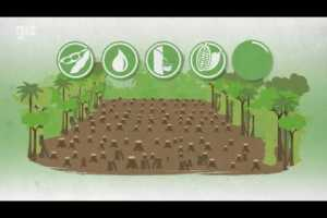 Deforestation-free supply chains: How you can contribute to make your company more sustainable