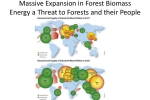 Massive Expansion in Forest Biomass Energy a Threat to Forests and their People