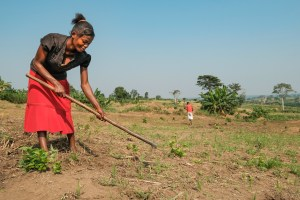 Let's secure Africa's soils to tackle climate change and hunger