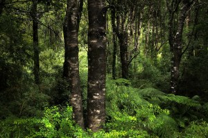 Forests in Chile to get $63 million boost from Green Climate Fund