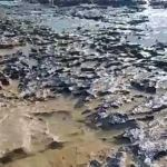 Footprints in the sand: A mysterious oil spill in Brazil forces migration