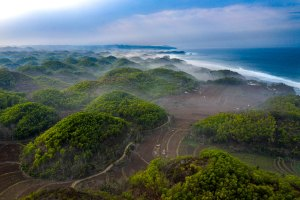 Strategy of the United Nations Decade on Ecosystem Restoration