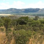 Miombo woodlands: the vast southern African dryland forests hiding in plain sight