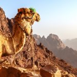 Wildlife rangers go virtual, carbon dioxide's new high and a 'green wall' for Sinai