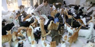 A 51 Year Old Woman Maryam al Balushi Lives With 480 Cats And 12 Dogs Then Spends $8000 Monthly On Them In Oman