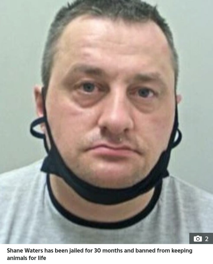 A Dad Shane Waters Jailed For Having Sex With Chickens And His Own Dog