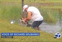 Video Of A Man Richard Wilbanks Jumping Into Water And Wrestles Alligator To Save His Puppy In Florida