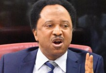 Senator Shehu Sani Praises Jonathan On His Refusal To Blame Buhari Govt For Insecurity