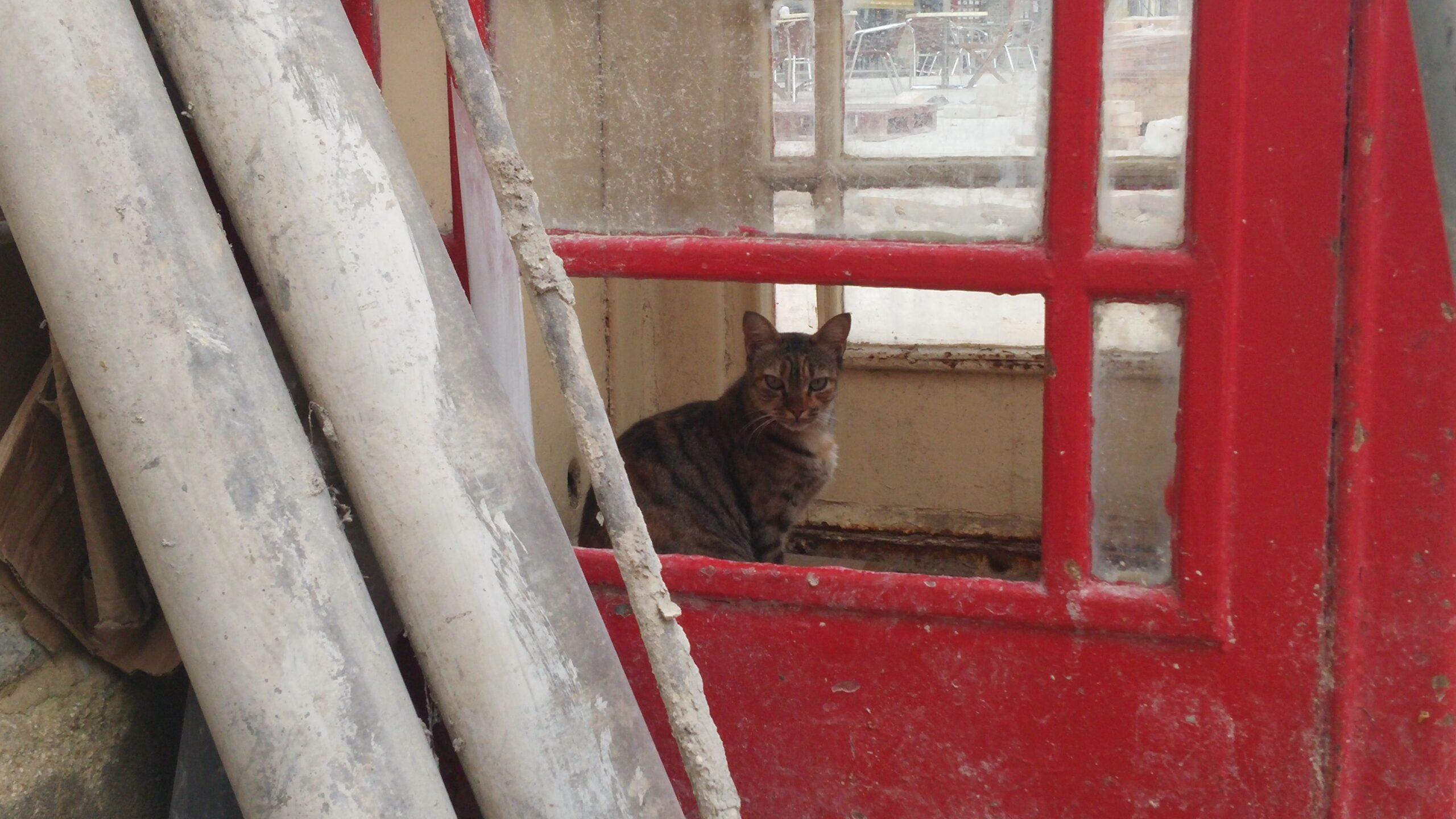 cats are everywhere in Malta