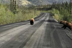 Trotz weit über 200 Kilogramm sind die Grizzlys keine Kuscheltiere.