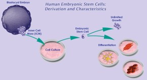 Embryonic stem cell derivation