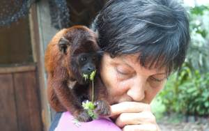 Volunteer with wildlife in Peruvian Amazon
