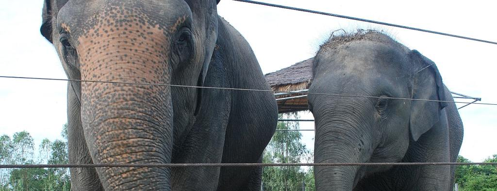 Two Elephants from the Thailand Elephant Sanctuary