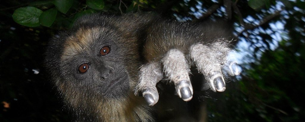 Howler Monkey Project