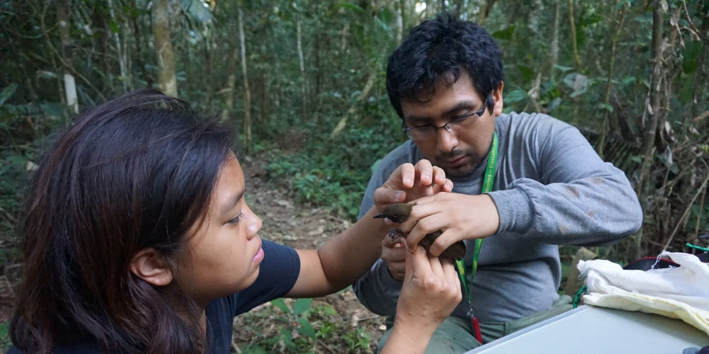 Peru conservation in action