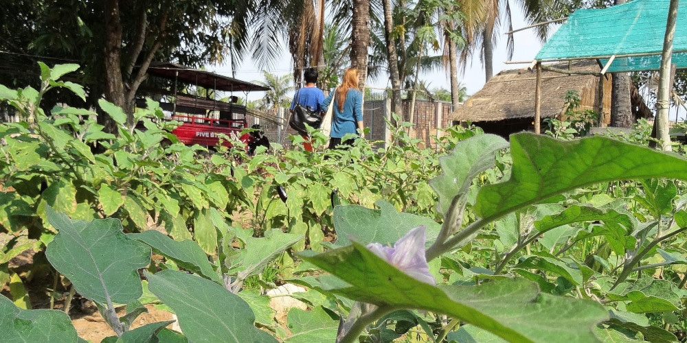 Volunteers at the Cambodia food and farming project