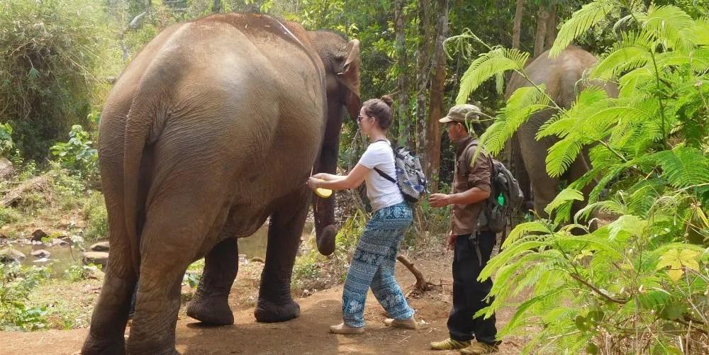 Volunteer with elephants in Cambodia