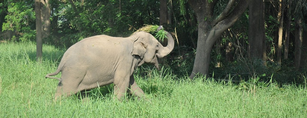 Retired elephant at the Thailand sanctuary